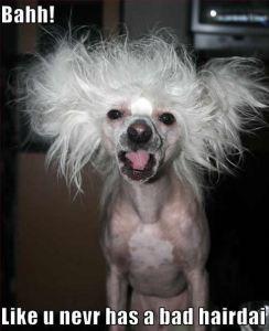bad-hair-day-dog